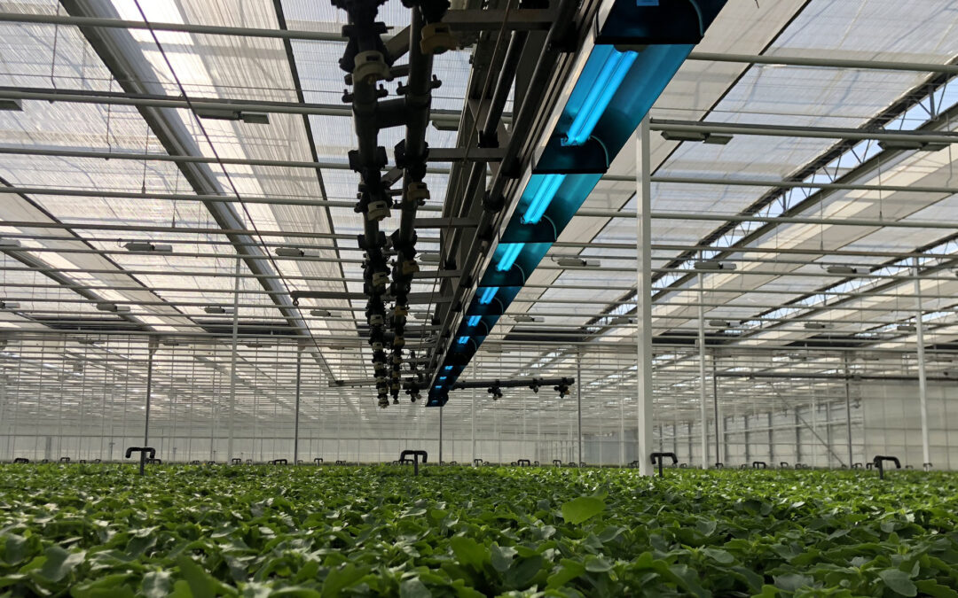 Problem-free cultivation with CleanLight